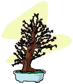 animasi-bergerak-pohon-bonsai-0003