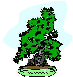 animasi-bergerak-pohon-bonsai-0009