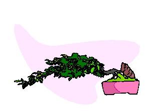 animasi-bergerak-pohon-bonsai-0010