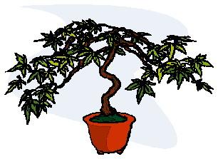 animasi-bergerak-pohon-bonsai-0017