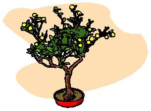 animasi-bergerak-pohon-bonsai-0020