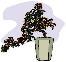 animasi-bergerak-pohon-bonsai-0021