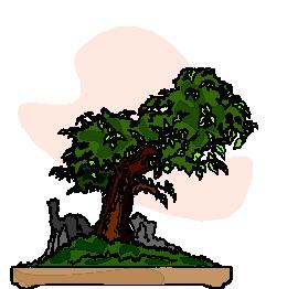 animasi-bergerak-pohon-bonsai-0022