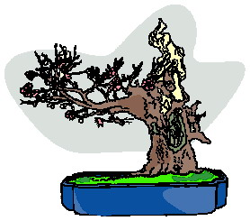animasi-bergerak-pohon-bonsai-0023