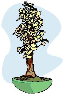 animasi-bergerak-pohon-bonsai-0028