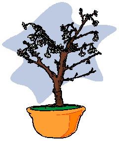 animasi-bergerak-pohon-bonsai-0030