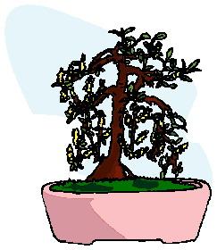 animasi-bergerak-pohon-bonsai-0031