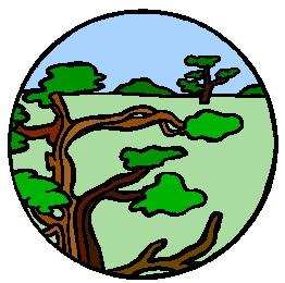 animasi-bergerak-pohon-bonsai-0038