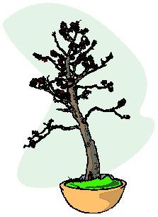 animasi-bergerak-pohon-bonsai-0042