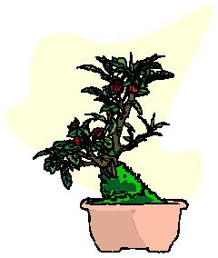 animasi-bergerak-pohon-bonsai-0043