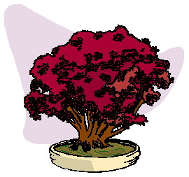animasi-bergerak-pohon-bonsai-0044