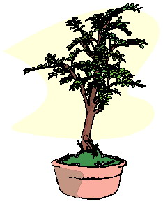 animasi-bergerak-pohon-bonsai-0045