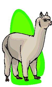 animasi-bergerak-llama-0011