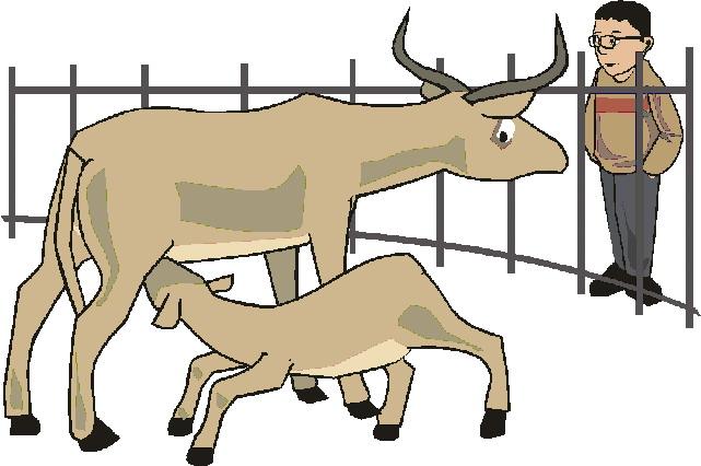 animasi-bergerak-kebun-binatang-0183