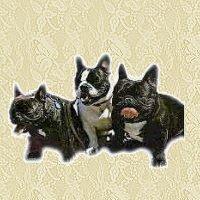 animasi-bergerak-bulldog-perancis-0004