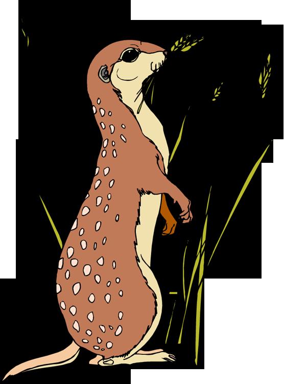 animasi-bergerak-meerkat-0009
