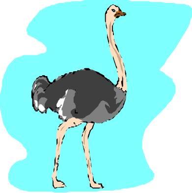 animasi-bergerak-burung-unta-0094