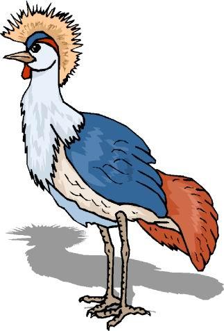 animasi-bergerak-burung-unta-0105