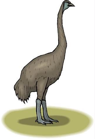 animasi-bergerak-burung-unta-0108
