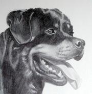 animasi-bergerak-anjing-rottweiler-0015
