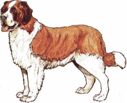 animasi-bergerak-anjing-st-bernard-0044