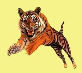 animasi-bergerak-macan-0021