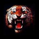 animasi-bergerak-macan-0059