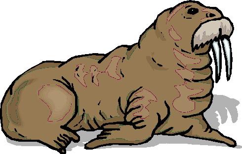 animasi-bergerak-walrus-0024
