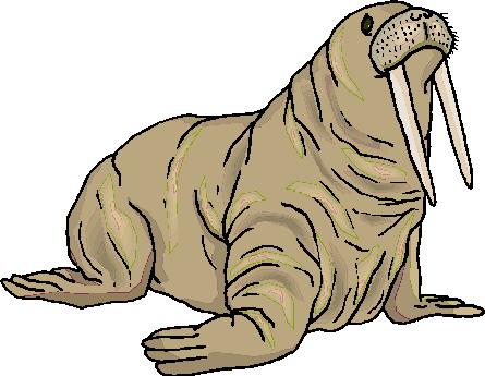 animasi-bergerak-walrus-0032