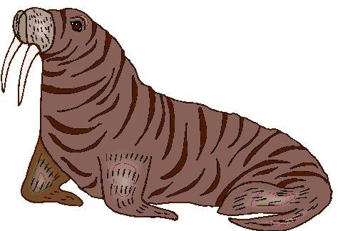 animasi-bergerak-walrus-0035