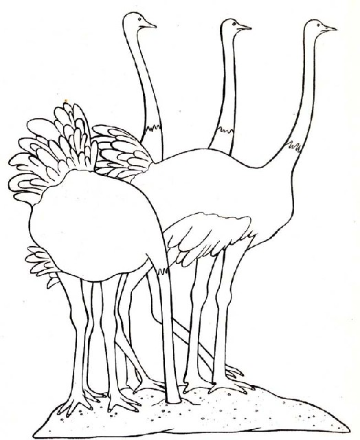 animasi-bergerak-mewarnai-burung-0022