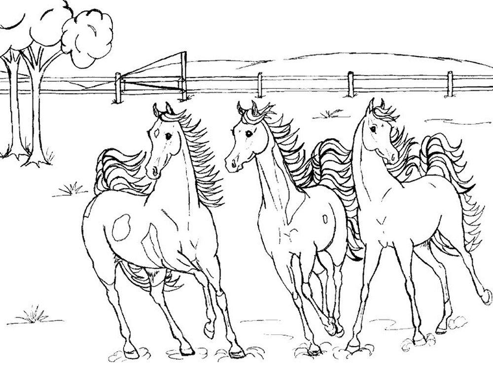 50+ Gambar Mewarnai Hewan Kuda Gratis Terbaik