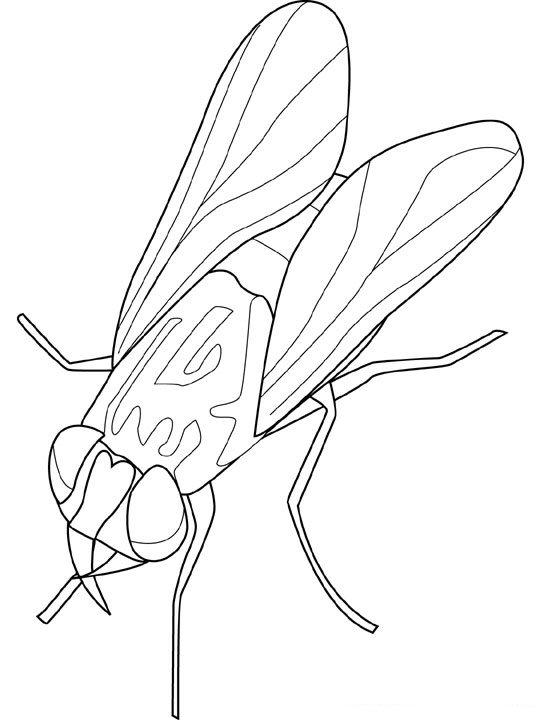 animasi-bergerak-mewarnai-serangga-0019