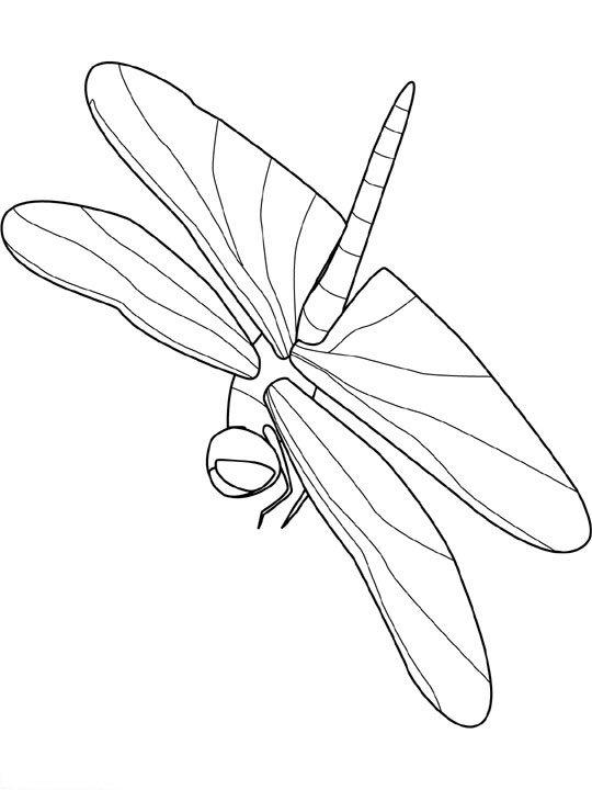 animasi-bergerak-mewarnai-serangga-0020