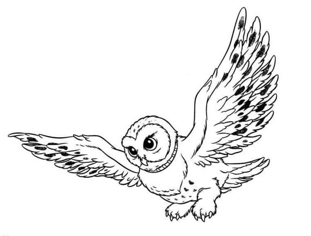 animasi-bergerak-mewarnai-burung-hantu-0005