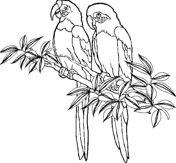 animasi-bergerak-mewarnai-burung-bayan-0012