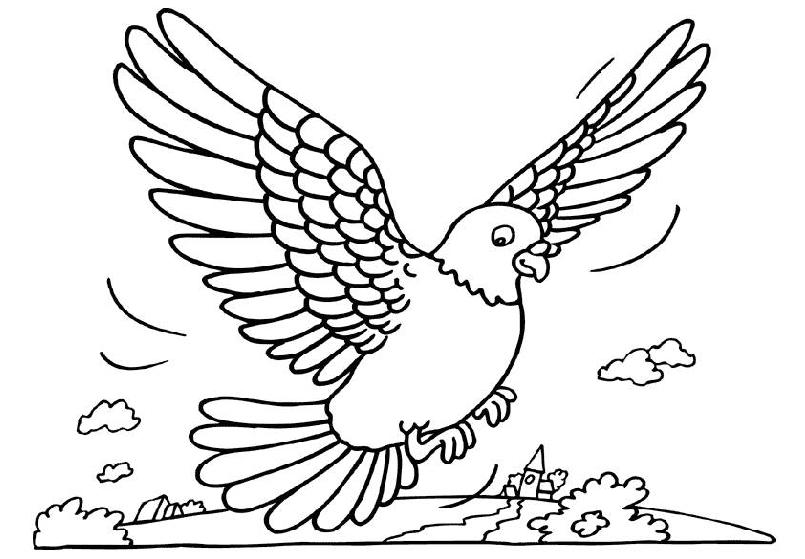 animasi-bergerak-mewarnai-burung-dara-merpati-0003