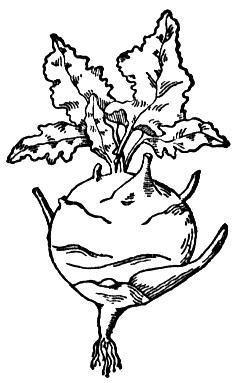 animasi-bergerak-mewarnai-sayuran-0016