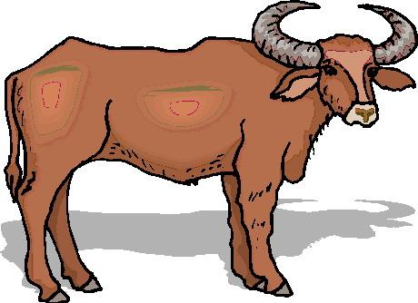 animasi-bergerak-banteng-lembu-0038