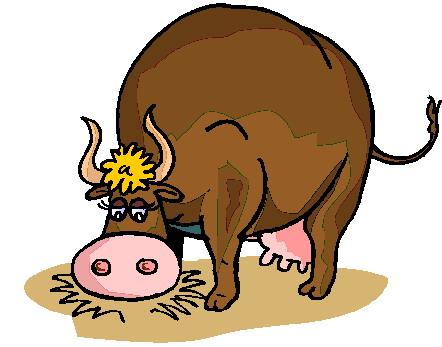 animasi-bergerak-banteng-lembu-0047