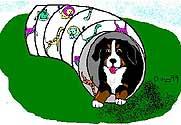 animasi-bergerak-anjing-gunung-bernese-0250
