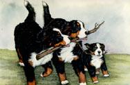 animasi-bergerak-anjing-gunung-bernese-0261
