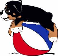 animasi-bergerak-anjing-gunung-bernese-0268